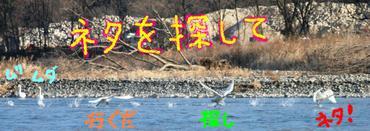Hakucho