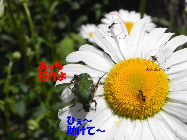 Ants0